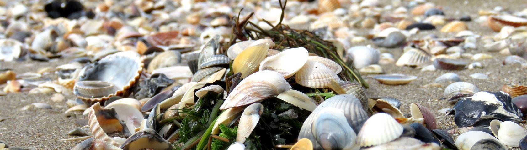 Shells on Cavallonie Beach