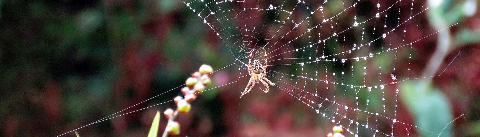 Spinnen Creatie