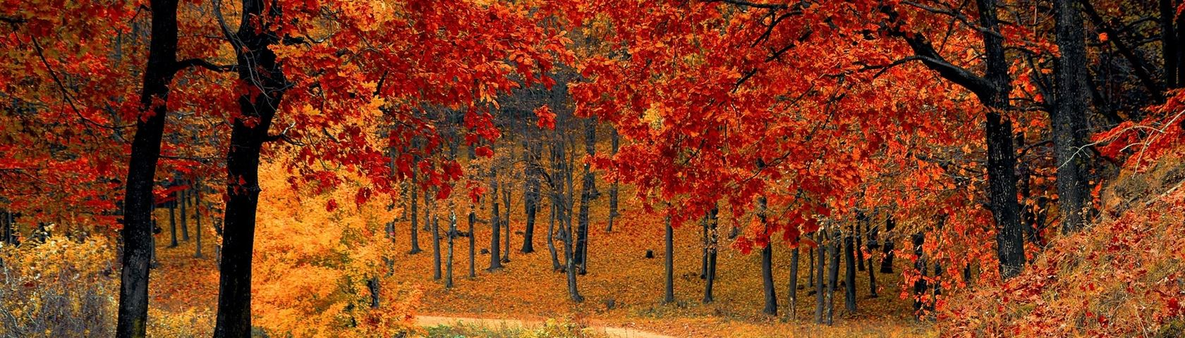 Red Leaf Lane