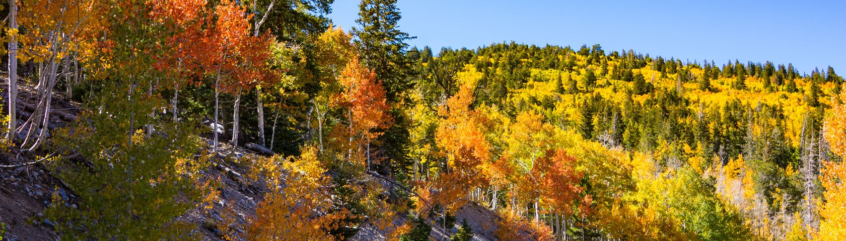Fall Colors at 11,000 Feet