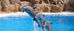 Dolphin Trio