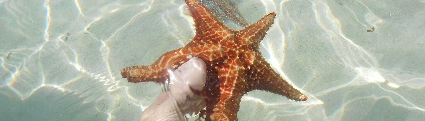 Starfish Cayman Island