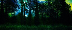 Green Woods of Enchantment