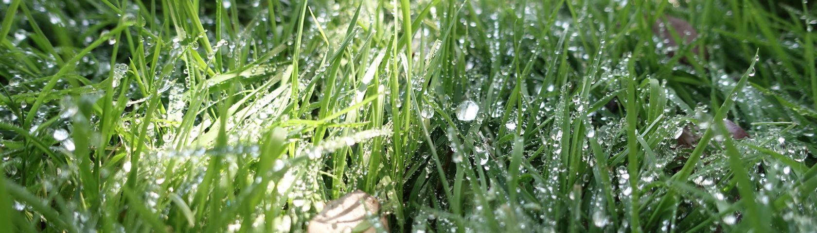 Dewy Grass KM1