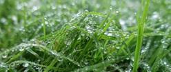 Dewy Grass KM2