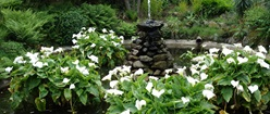 Guernsey Garden