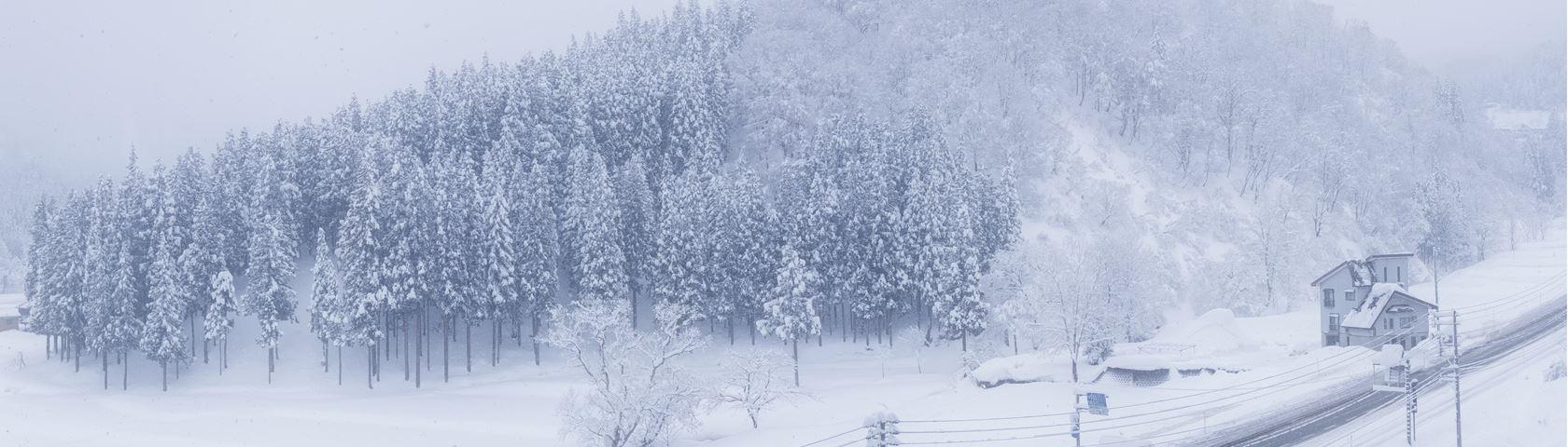 Yuzawa Snow