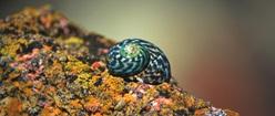 Seashell and Lichen