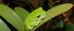 Green Fauna on Flora