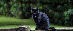 Cat Contempt