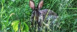 Cautious Bunny