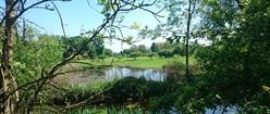 Thames Marsh