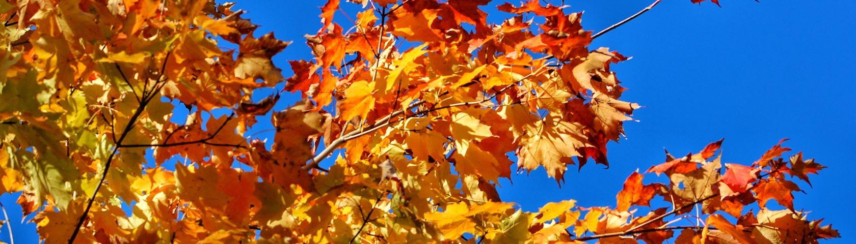 Autumn Dazzle