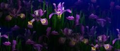 Iris Illusion