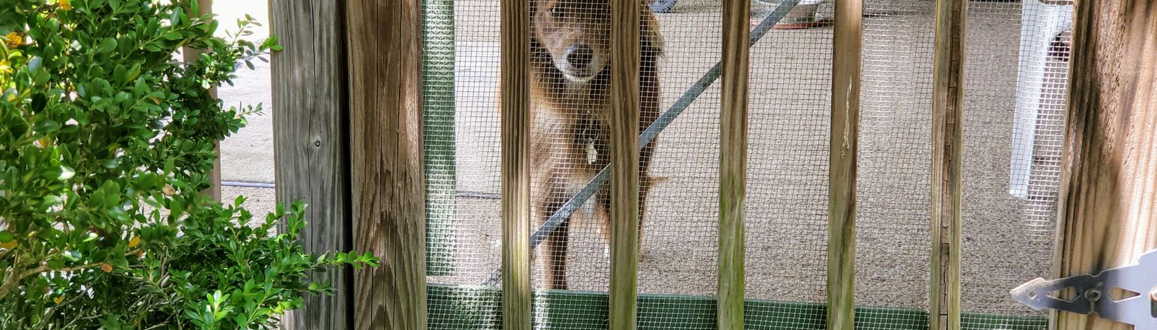 Kuma Imprisoned