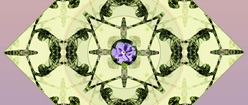 Purple Flower with Green Symmetry