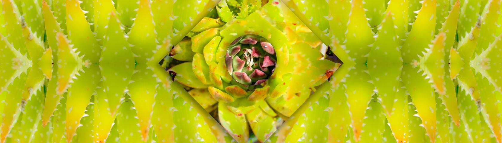 Succulent Symmetry