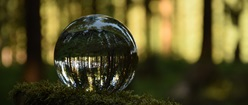 Forest in a Sphere
