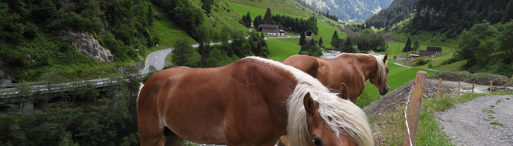 Horses on Austria Mountains