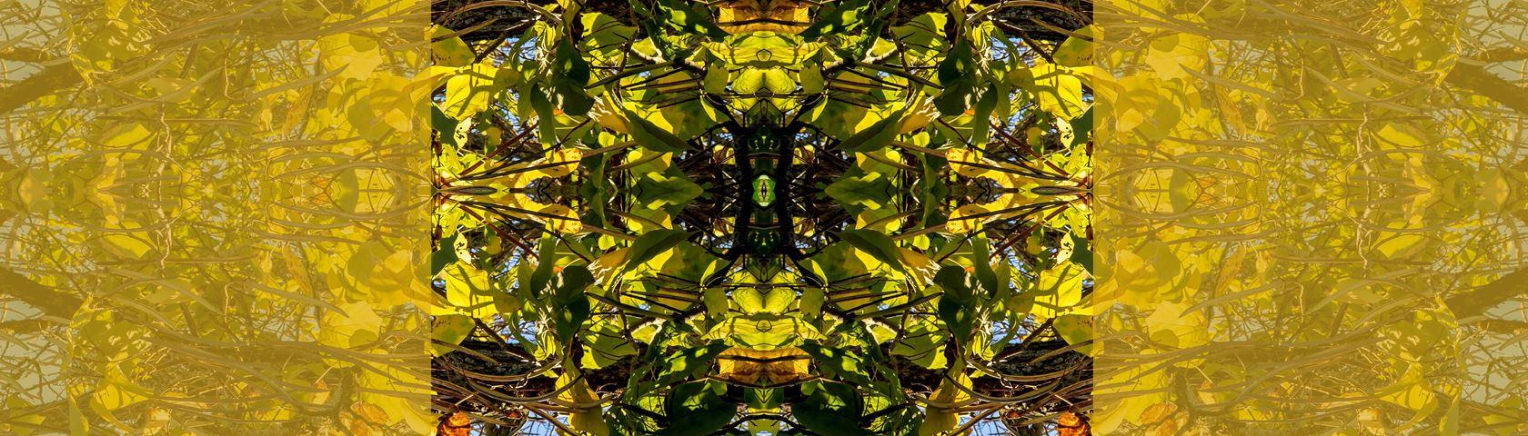 Catalpa Tree Symmetry with Gold Tones