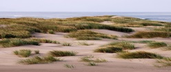 Out Across the Dunes