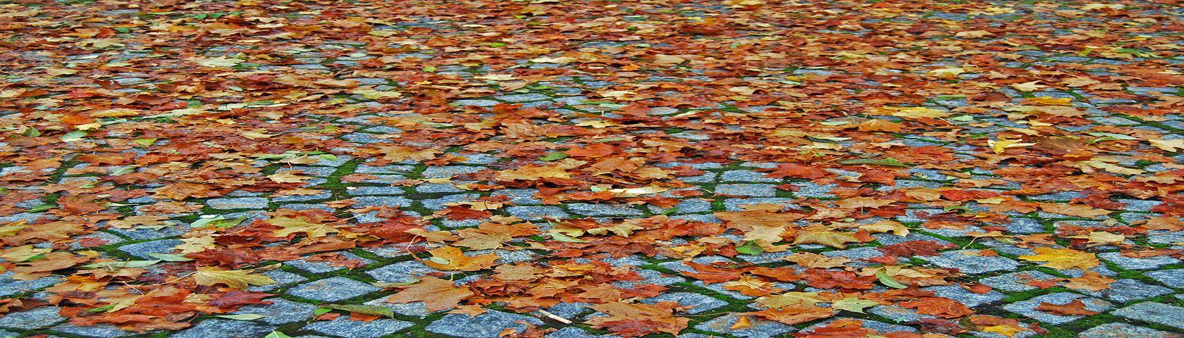 Cobblestones and Leaf