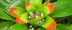 Rain Filled Flower