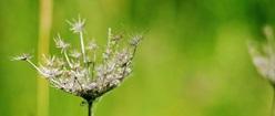 Thorny Nature