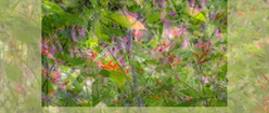 Soft Montage of Garden Images