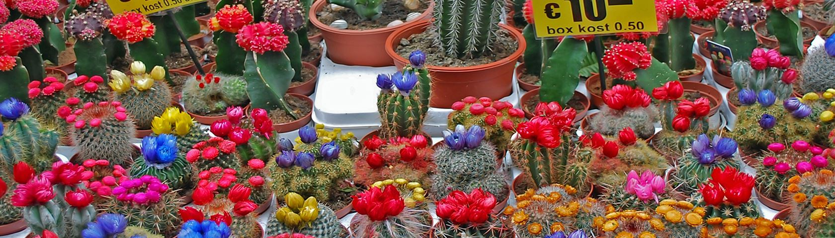 At the Cactus Store