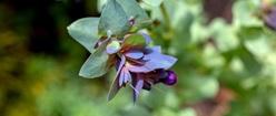 A Bug, a Bloom