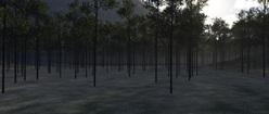 Illustrian Forest