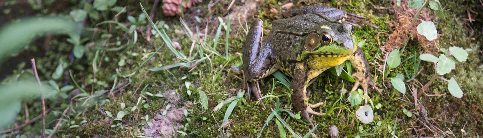 Friendly Frog