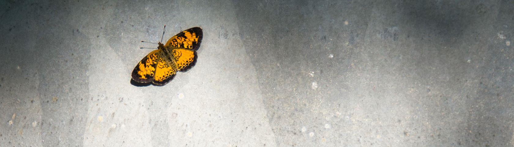 Butterfly on Guardrail