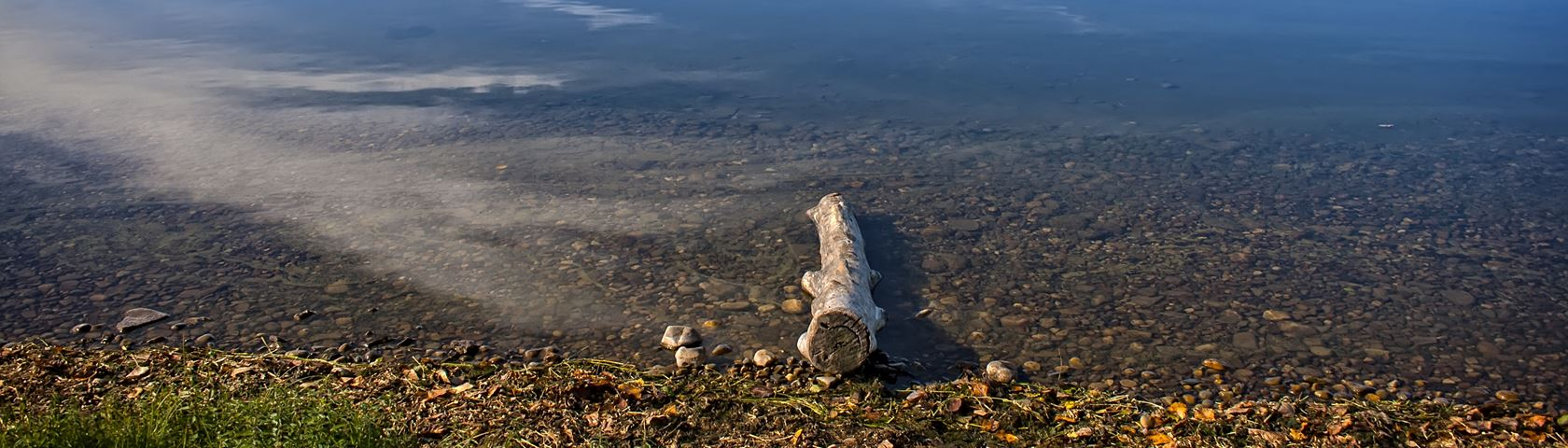 The Lonely Log