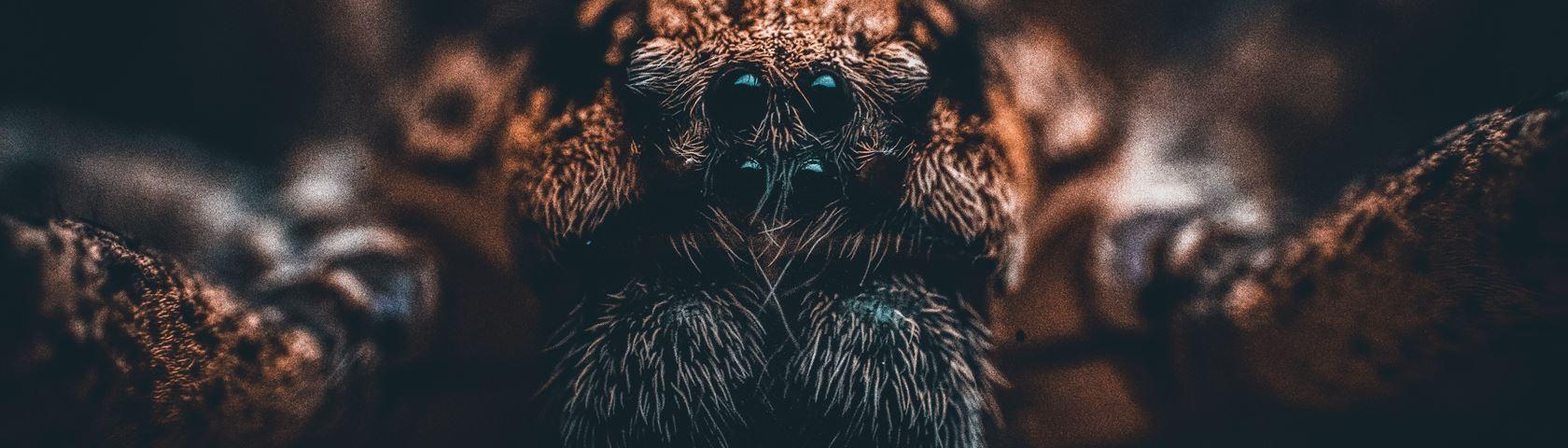 Spider Close-Up
