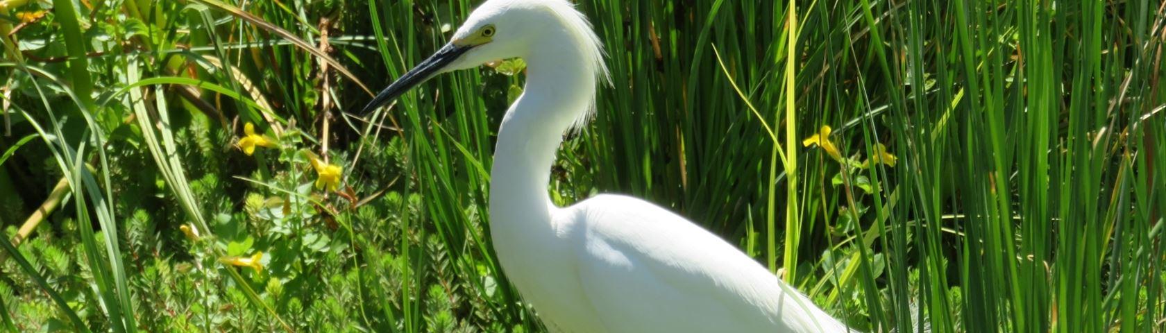 Stork in Florida