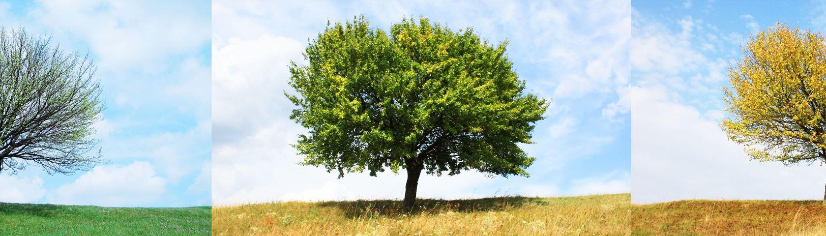 One Tree - Four Seasons
