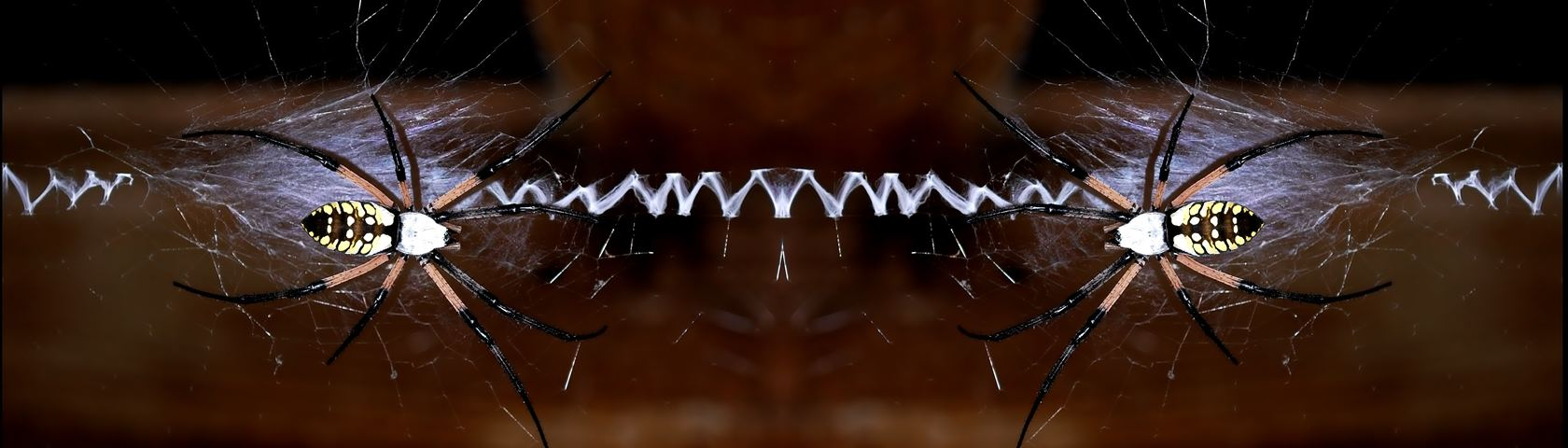 An Amazing Arachnid 2 by Alpine Arts