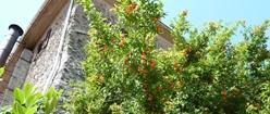 Foliage in Italy
