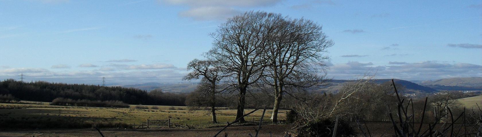 Winter Tree in Hensol