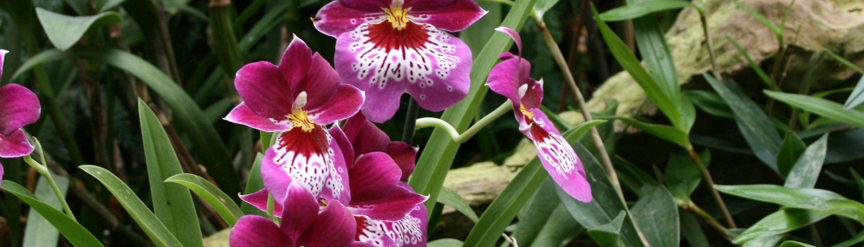 Orkideer Flower