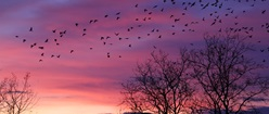 Birds and Purple Sky
