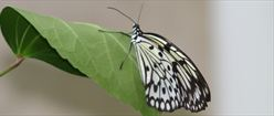 Gray and White Butterfly on Leaf
