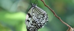 Gray and White Butterfly on Stick