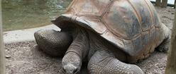 One Big Tortoise