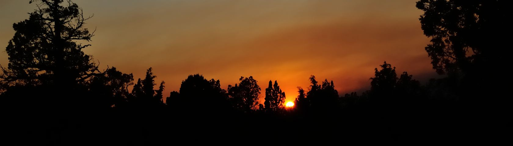 Tree Top Sunset