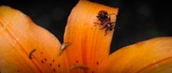 Bugs Giving Hugs