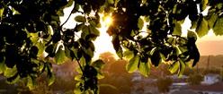 Sun on Zakynthos