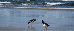 Two Birds on Beach